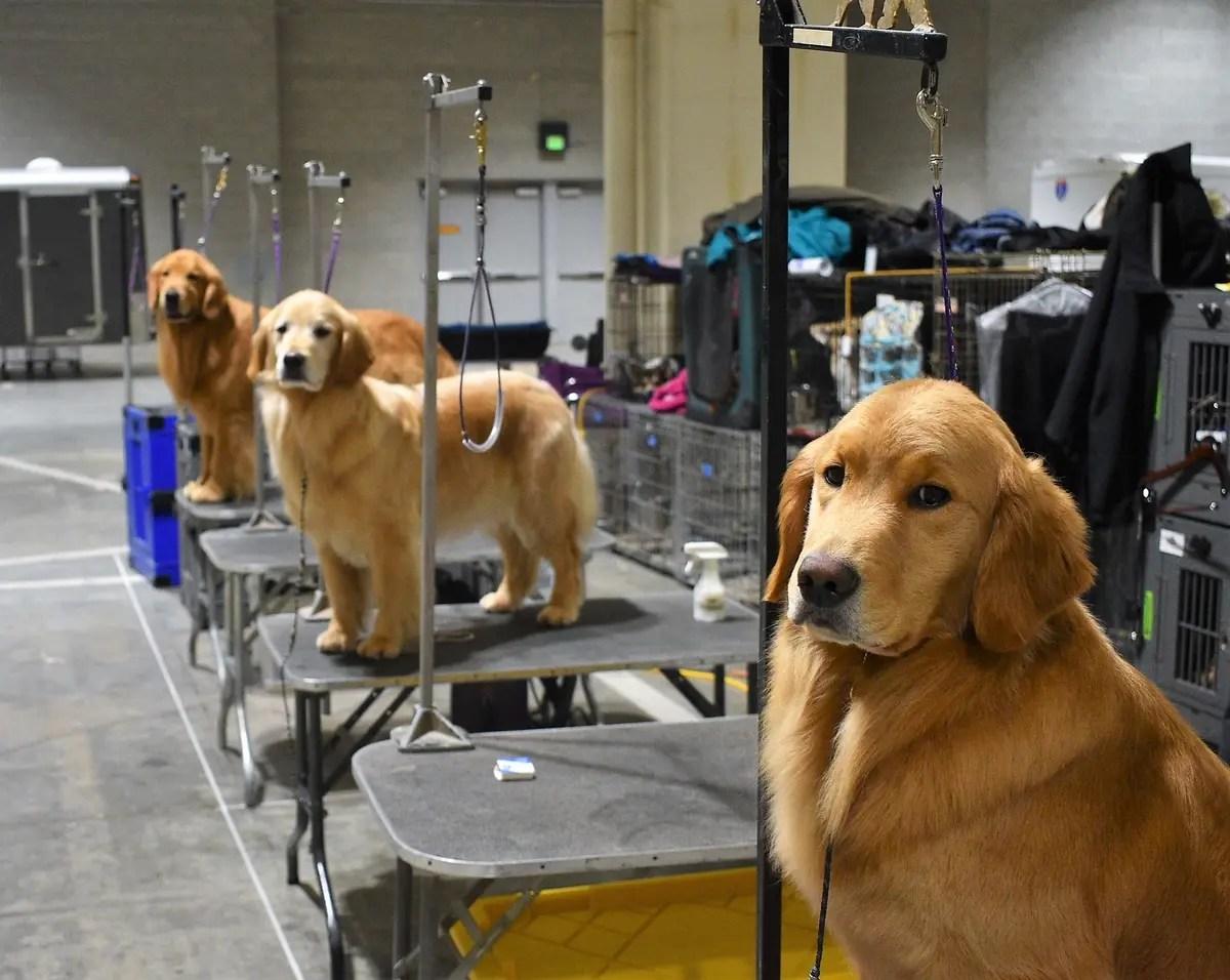 Photos Seattle Kennel Club Dog Show