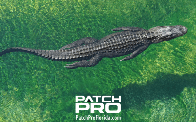 The Best Places In Florida To See Alligators