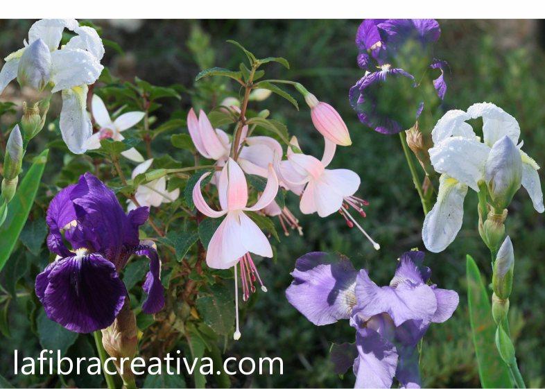 panel para patchwork impreso sobretela iris y fucsia