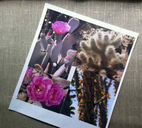 Flores de cactus impresas en tela.