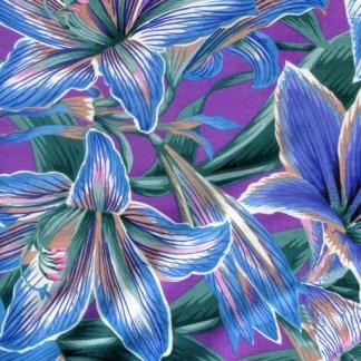 Amaryllis - Blue PWPJ104-BLUE