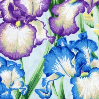 Bearded Iris - Cool PWPJ105-COOL