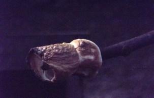 marshmellow (3)