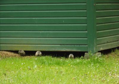 peeking-2