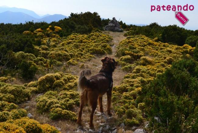 Cima del Pico las Calmas