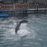 Ocean World Dolphin Show