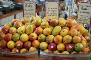 No shortage of mangoes in South Florida