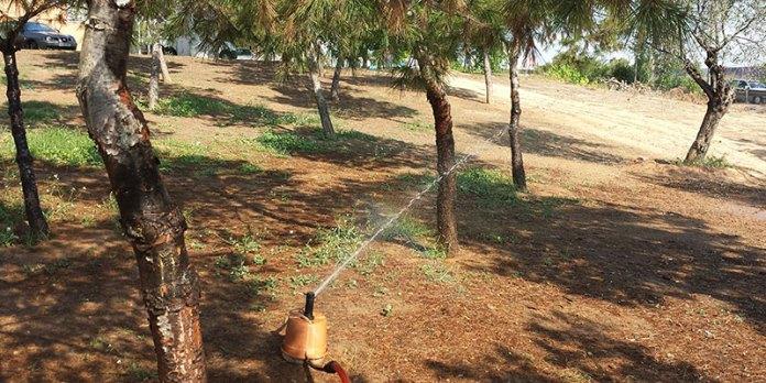 Riego de pinos mediante aspersores instalados en el parque de la Avenida Europa