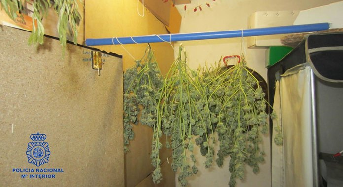 Imagen de la Plantación de marihuana desmantelada en Paterna