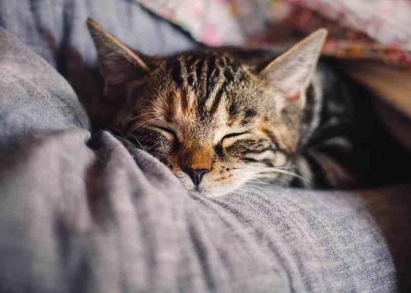 Foto de gatinho cansado dormindo.