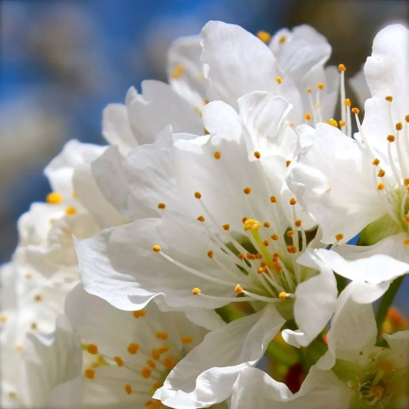 belle fleur7