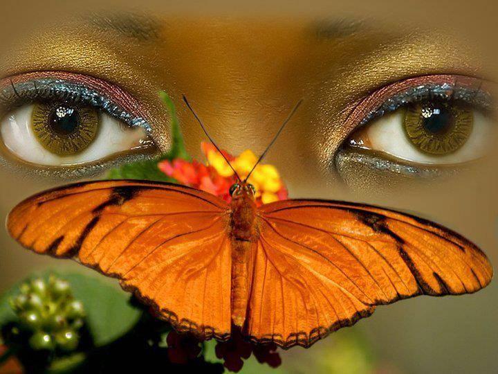 regard papillon