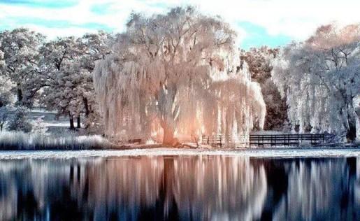 beau paysage hiver