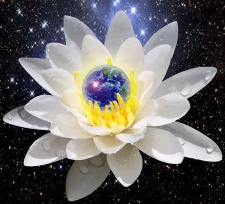 gaia lotus