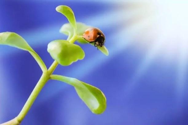 Ladybird on green plant