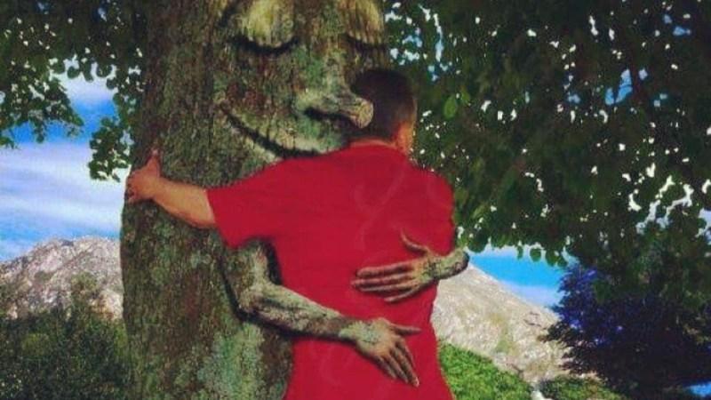 L'âme des arbres