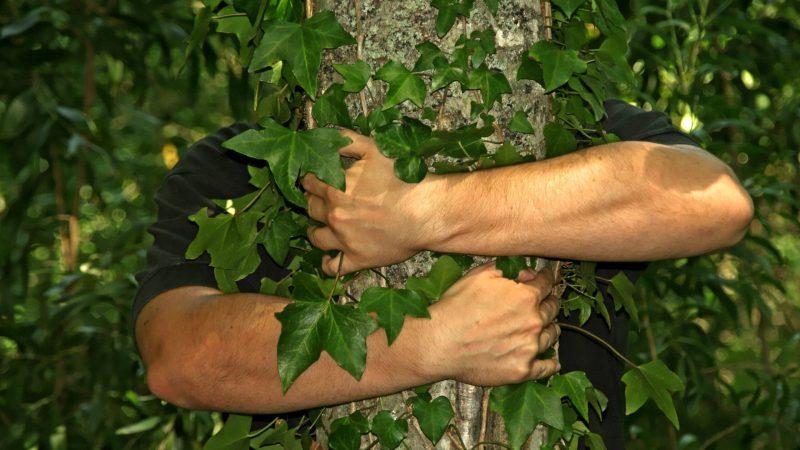 Apprenez à entrer en contact avec les arbres