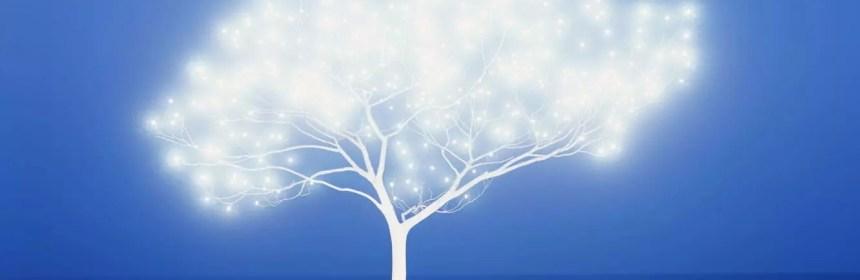 arbre source