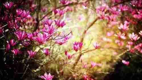 Fleurissez et rayonnez pour les autres