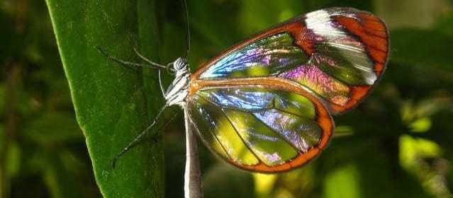 L'effet papillon : comment sauver le monde grâce à de petites actions