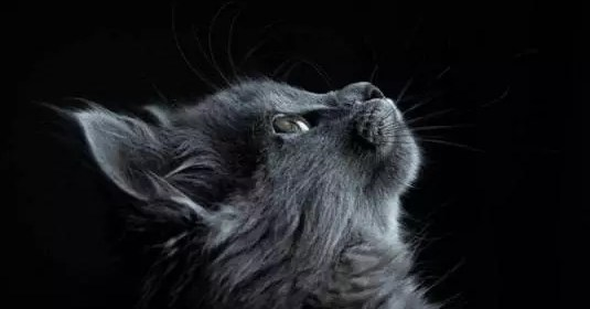 Bien plus qu'un animal de compagnie, vous partagez peut-être une connexion spirituelle avec votre chat