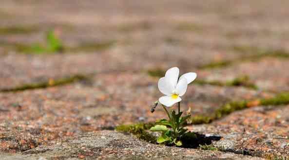 L'espoir est un outil précieux