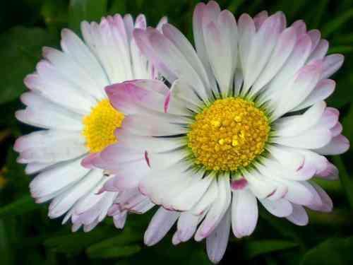 Rayonnez comme des fleurs