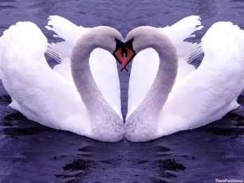 Faire grandir et offrir l'Amour