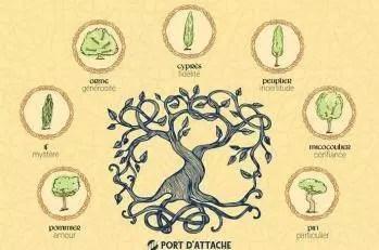 Quel est votre signe astrologique celtique