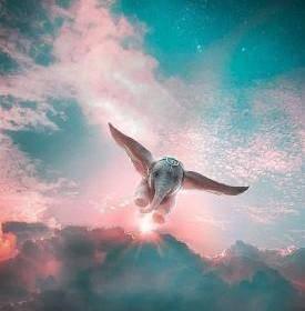 Notre âme nous relie à un même Cœur Universel qui à un langage simple