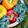 Les 10 meilleurs aliments pour élever votre vibration