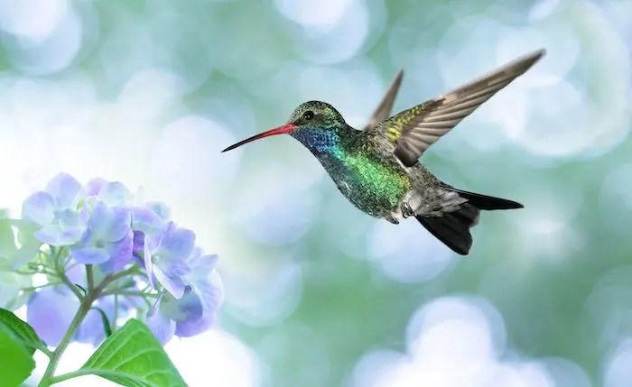 animal totem colibri