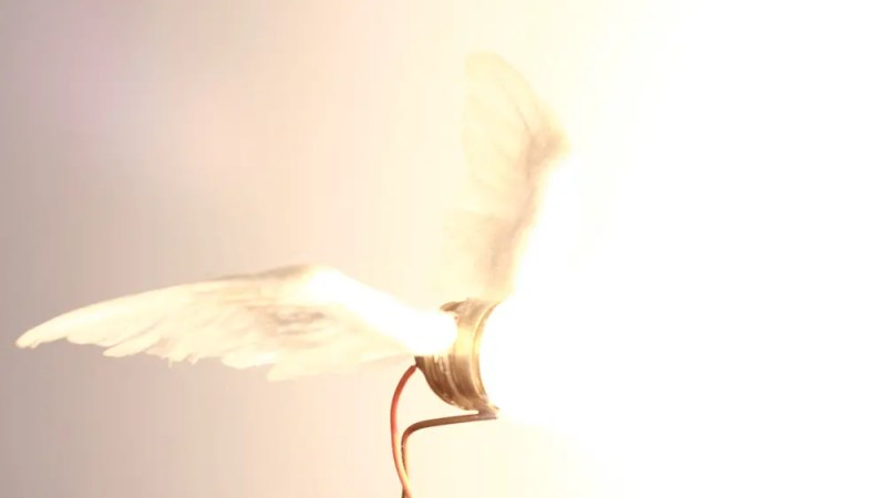 ailes divines