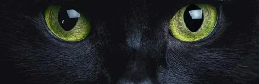 le chat protecteur