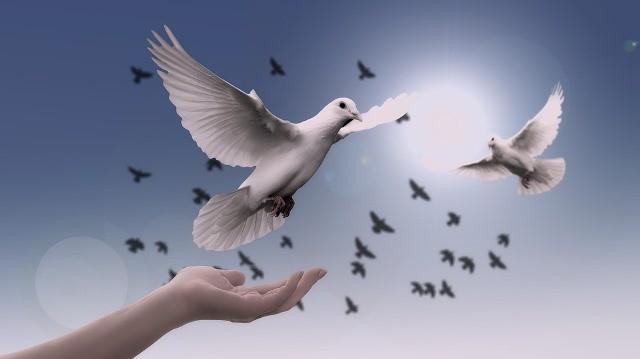 reve de paix