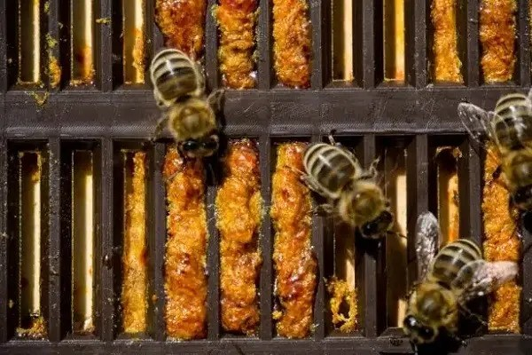 abeille propolis
