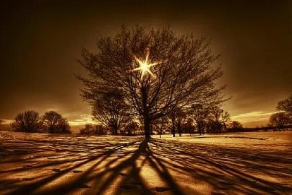 arbres lumineux