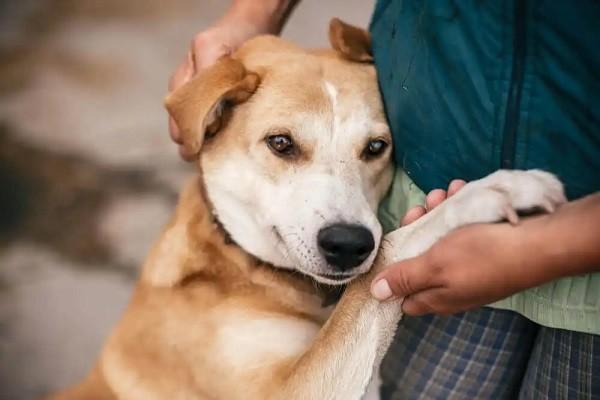 Adopter un animal est très important, pourquoi ?