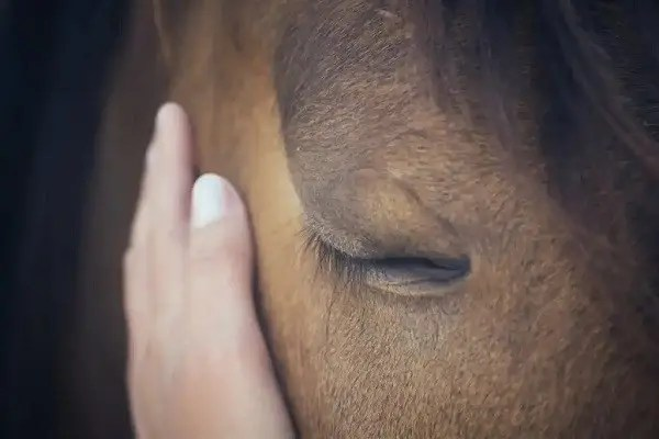 emotions-chevaux-emotions