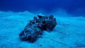 spotthefrogfish