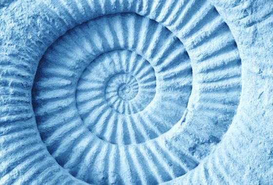 36961310 - abstract blue made from ammonite prehistoric fossil on the surface