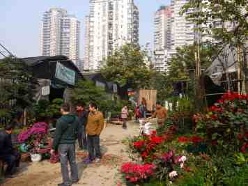 The Guanyinqiao flower market.