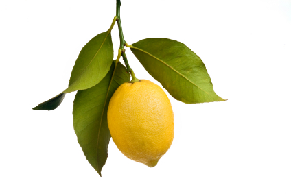 Lemon hanging from a branch with leaves