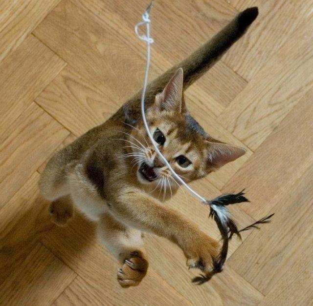 active kitten