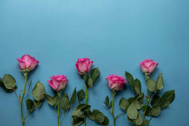 fresh flowers with green stems on blue background