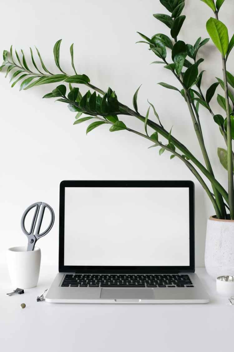 laptop on desk near lush houseplant