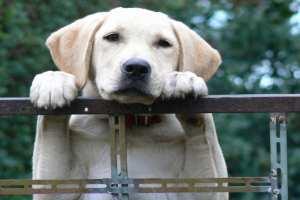 chronic fatigue syndrome cfs dog