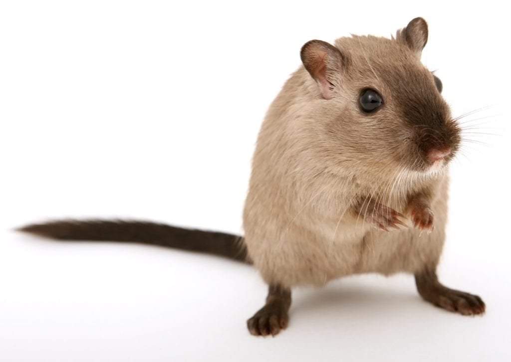 New Study Shows Mice Can Successfully Mimic Human Cancers