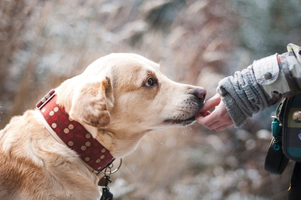 New Study Shows How Therapy Dogs Help Children with Leukemia
