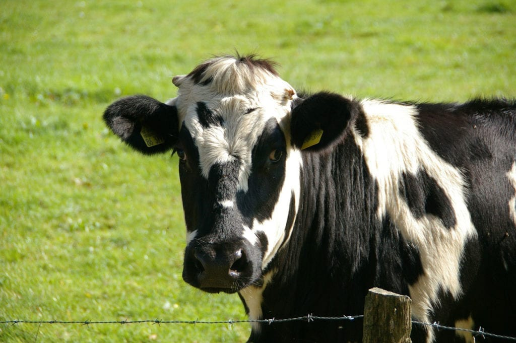 Cows, Cud-Chewing, and Contentment: Phyllis's Rumination Syndrome Story